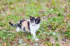 Kleurrijk katje die op gras lopen Royalty-vrije Stock Foto