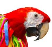 Kleurrijk knipsel van rode papegaai met leeswijzers en linten royalty-vrije stock fotografie