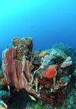 Kleurrijk koraalrif Stock Afbeeldingen