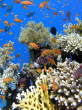Kleurrijk koraalrif Royalty-vrije Stock Foto