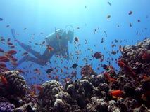 Kleurrijk koraalrif stock video