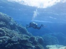 Kleurrijk koraalrif bij de bodem van tropische overzees, duikerfotograaf, onderwaterlandschap stock afbeelding