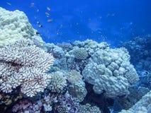 Kleurrijk koraalrif bij de bodem van tropische overzees, onderwaterlandschap royalty-vrije stock foto's