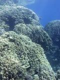 Kleurrijk koraalrif bij de bodem van tropische overzees, onderwaterlandschap stock foto
