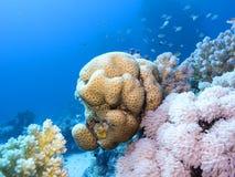 Kleurrijk koraalrif bij de bodem van tropische overzees, onderwaterlandschap stock fotografie
