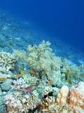 Kleurrijk koraalrif bij de bodem van tropische overzees, onderwaterlandschap royalty-vrije stock foto