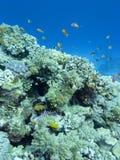 Kleurrijk koraalrif bij de bodem van tropische overzees, onderwaterlandschap stock afbeeldingen