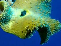 Kleurrijk koraalrif bij de bodem van tropische overzees, onderwaterlandschap royalty-vrije stock afbeeldingen