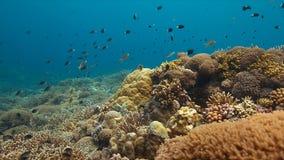 Kleurrijk koraalrif in Filippijnen Royalty-vrije Stock Foto's