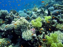 Kleurrijk koraalrif met harde en zachte koralen Royalty-vrije Stock Fotografie