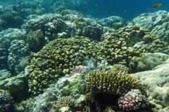 Kleurrijk koraalrif met vissen Royalty-vrije Stock Foto's
