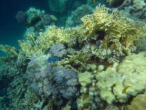 Kleurrijk koraalrif met vissen Stock Foto