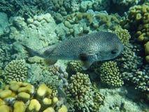 Kleurrijk koraalrif met vissen Stock Afbeelding