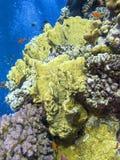 Kleurrijk koraalrif op de bodem van tropische overzees, onderwaterlandschap royalty-vrije stock fotografie