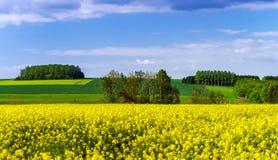 Kleurrijk landelijk landschap met gele bittercressgebieden stock foto