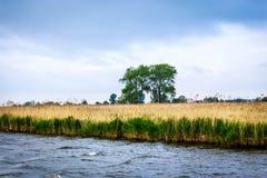 Kleurrijk landschap Royalty-vrije Stock Afbeelding