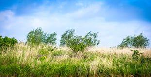 Kleurrijk landschap Royalty-vrije Stock Afbeeldingen