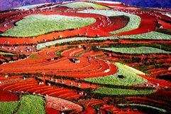 Kleurrijk landschap royalty-vrije stock foto's