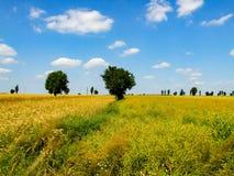 Kleurrijk landschap van mazovian weiden royalty-vrije stock fotografie