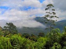 Kleurrijk landschap van Munnar, Kerala, India Royalty-vrije Stock Afbeelding
