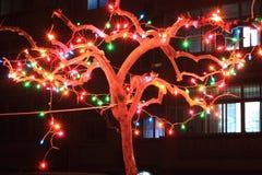 Kleurrijk licht Stock Foto
