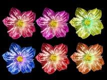Kleurrijk Lotus Royalty-vrije Stock Foto's