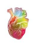 Kleurrijk menselijk hart Stock Foto's