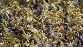 Kleurrijk mos Royalty-vrije Stock Afbeelding