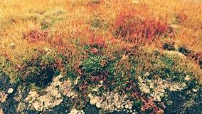 Kleurrijk mosdetail in bos Royalty-vrije Stock Afbeelding