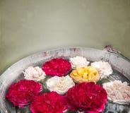 Kleurrijk nam bloemen in emmer toe stock afbeelding