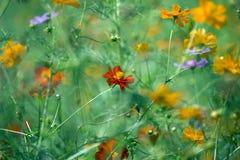 Kleurrijk natuurlijk patroon met bloemenornament nuttig als backgrou Royalty-vrije Stock Foto's