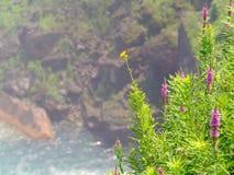Kleurrijk onkruid in voorgrond die tegen toneelachtergrond wordt geplaatst Royalty-vrije Stock Foto