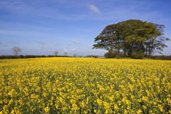 Kleurrijk oud landschap Stock Foto's