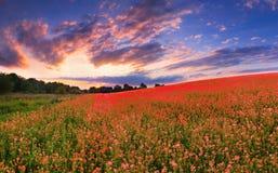 Kleurrijk panorama Royalty-vrije Stock Foto