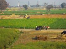 Kleurrijk platteland, India Stock Fotografie