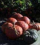 Kleurrijk pompoenassortiment in de middagzon van Vermont royalty-vrije stock fotografie