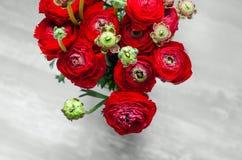 Kleurrijk rood boeket van bloemenranunculus de lente Stock Fotografie