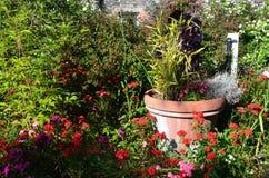 Kleurrijk rustiek Bloembed Stock Foto
