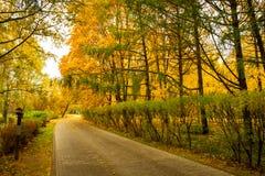 Kleurrijk Seizoengebonden Autumn With Track In Park royalty-vrije stock afbeelding