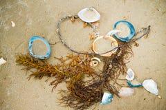 Kleurrijk shells en zeewier op het strand Stock Foto