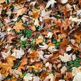 Kleurrijk tapijt Royalty-vrije Stock Afbeeldingen