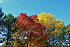 Kleurrijk van Autumn Leaves en boom-Daling Gebladerte Stock Foto