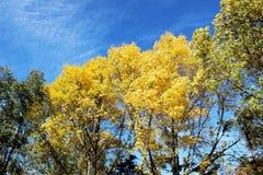 Kleurrijk van Autumn Leaves en boom-Daling Gebladerte Stock Foto's