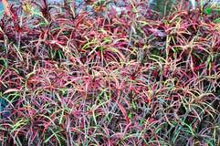 Kleurrijk van bloem Stock Foto