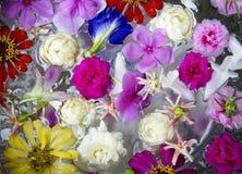 Kleurrijk van bloem. Stock Foto's