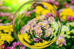 Kleurrijk van chrysantenbloemen in het effect van de glasbal met vage Bloemenachtergrond Royalty-vrije Stock Foto's
