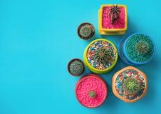 Kleurrijk van diverse cactus met exemplaarruimte Royalty-vrije Stock Afbeelding