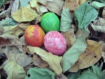 Kleurrijk van eieren op droge bladerenachtergrond, Pasen, eierenpaintin Stock Fotografie