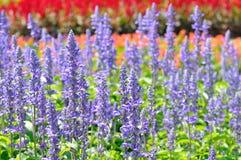 Kleurrijk van velen kleine bloem Stock Afbeeldingen