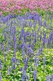 Kleurrijk van velen kleine bloem Stock Afbeelding